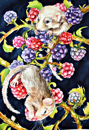 The mouse  in raspberries